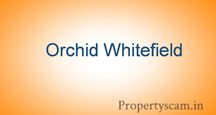 orchid white field